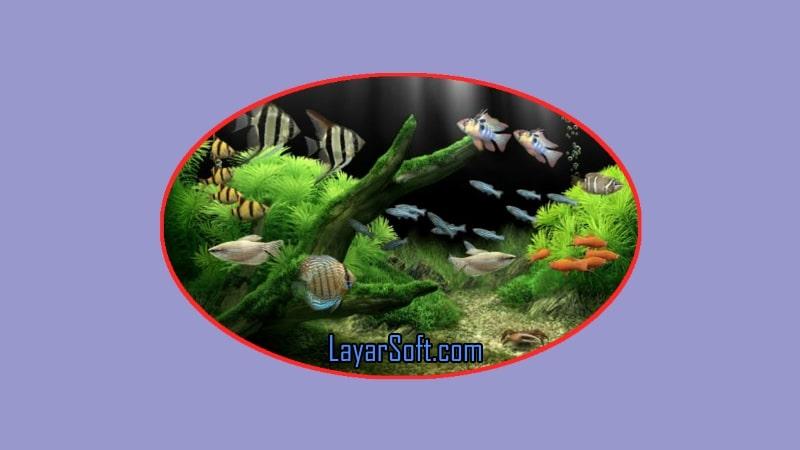 Dream Aquarium Screensaver full